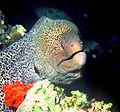 Conocer hombre acuario-53501